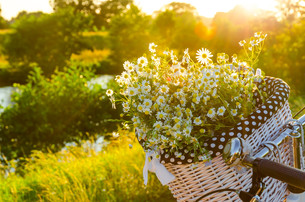 baskets with daisies at sunsetの写真素材 [FYI00879324]