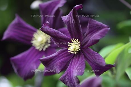 plants_flowersの写真素材 [FYI00879452]