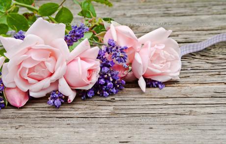 plants_flowersの写真素材 [FYI00879519]