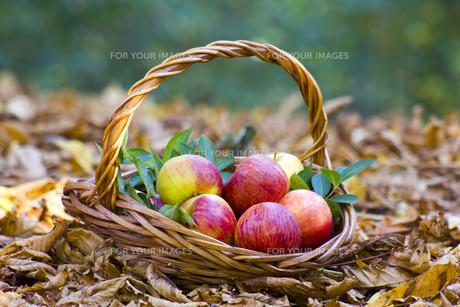 fruits_vegetablesの写真素材 [FYI00879562]