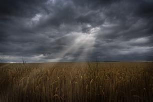 grass_fieldsの写真素材 [FYI00879646]