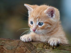home_animalsの写真素材 [FYI00879820]