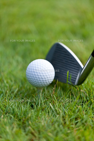 golf ball and golf club tee closeup on green lawnの写真素材 [FYI00879890]