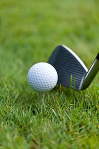 golf ball and golf club tee closeup on green lawnの写真素材 [FYI00879890]