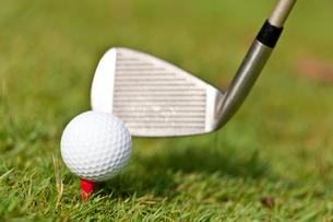 golf ball and golf club tee closeup on green lawnの写真素材 [FYI00879938]