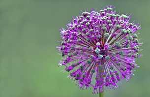 plants_flowersの写真素材 [FYI00880042]