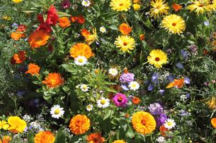 plants_flowersの写真素材 [FYI00880350]