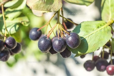 fruits_vegetablesの写真素材 [FYI00880456]