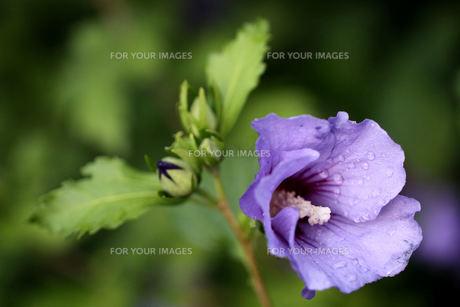 plants_flowersの写真素材 [FYI00880532]
