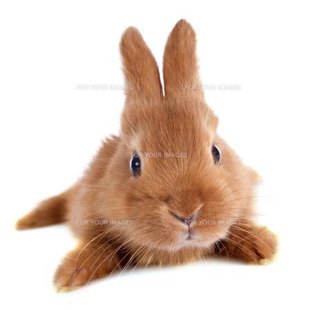 useful_animalsの写真素材 [FYI00880698]