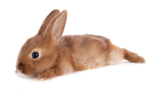 useful_animalsの写真素材 [FYI00880738]