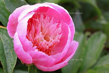 plants_flowersの素材 [FYI00880751]