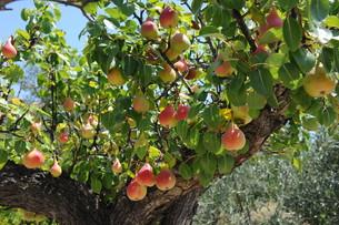 fruits_vegetablesの写真素材 [FYI00880812]