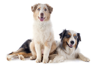 dogの写真素材 [FYI00880995]