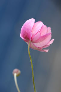 plants_flowersの写真素材 [FYI00881144]