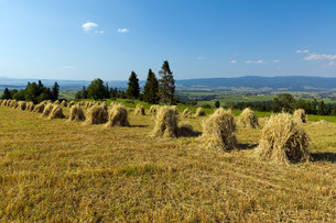 field with some bundles of hay on blue sky backgroundの写真素材 [FYI00881302]