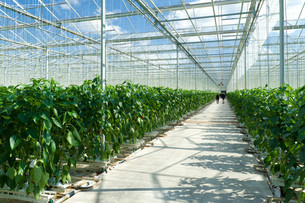 agricultureの写真素材 [FYI00881401]