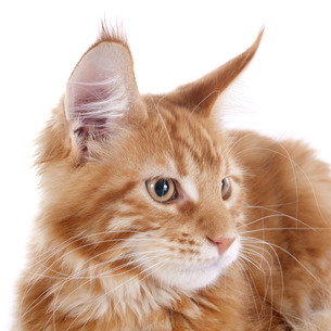 cat babyの写真素材 [FYI00881483]