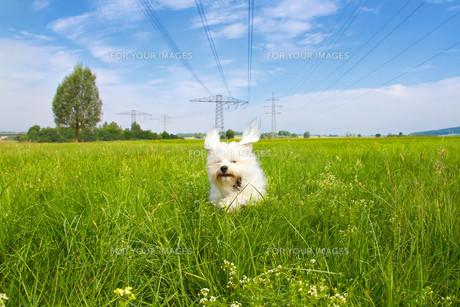dog liveの写真素材 [FYI00881868]