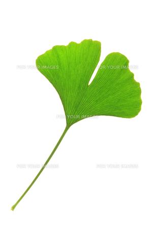 plants_flowersの写真素材 [FYI00881946]
