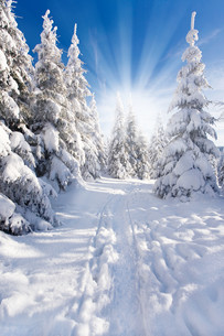 sun in the winter forestの写真素材 [FYI00882213]