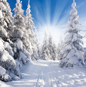 sun in the winter forestの写真素材 [FYI00882248]