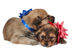 two puppies in loveの写真素材 [FYI00882258]