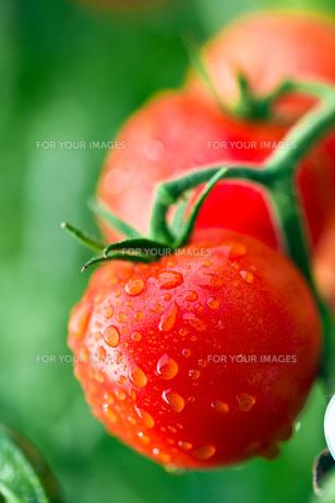 fruits_vegetablesの写真素材 [FYI00882279]