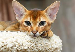 home_animalsの写真素材 [FYI00882344]