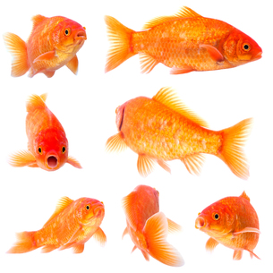 fishes_crustaceansの写真素材 [FYI00882459]