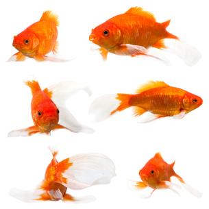 fishes_crustaceansの写真素材 [FYI00882488]