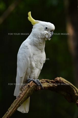 birdsの写真素材 [FYI00882496]