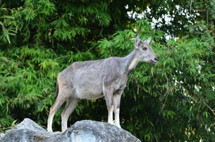 mammalsの写真素材 [FYI00882531]