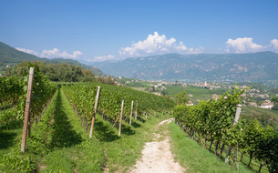 wine village appiano on the south tyrolean wine routeの写真素材 [FYI00882602]