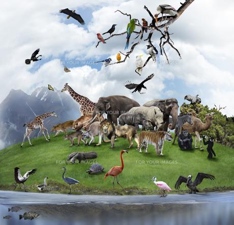 animalsの写真素材 [FYI00882633]
