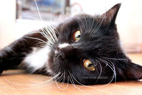 home_animalsの写真素材 [FYI00882651]
