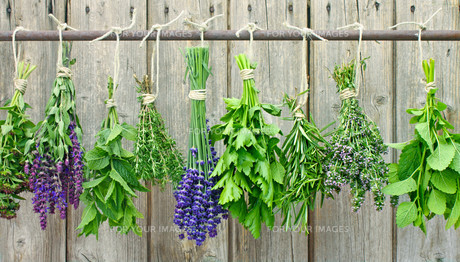 fresh herbsの写真素材 [FYI00882719]