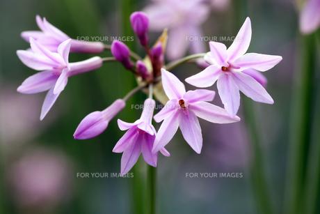plants_flowersの素材 [FYI00882811]