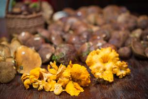 mushroomsの写真素材 [FYI00882874]