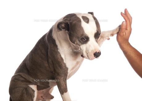 home_animalsの写真素材 [FYI00882880]