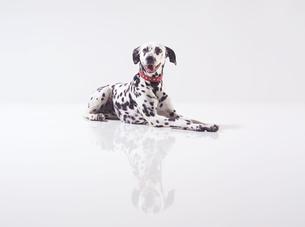mammalの写真素材 [FYI00883080]