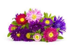 plants_flowersの写真素材 [FYI00883334]
