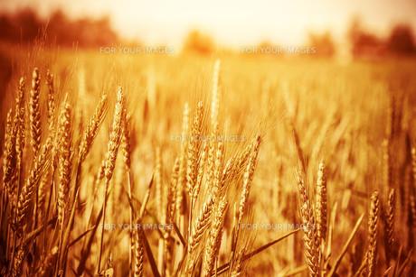 grass_fieldsの素材 [FYI00883359]