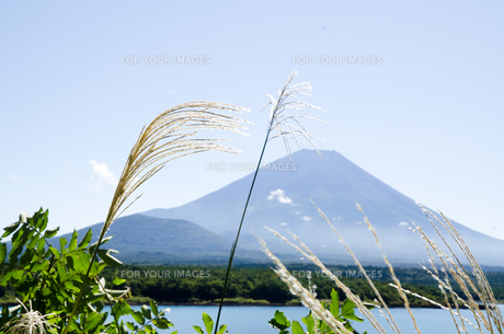 富士山とススキ 朝霧高原の写真素材 [FYI00883530]