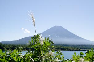 富士山とススキ 朝霧高原の写真素材 [FYI00883531]