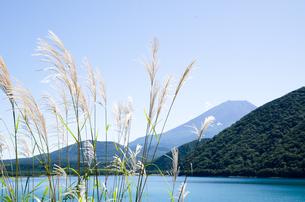 富士山とススキ 朝霧高原の写真素材 [FYI00883532]