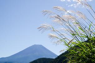 富士山とススキ 朝霧高原の写真素材 [FYI00883533]