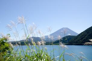 富士山とススキ 朝霧高原の写真素材 [FYI00883534]
