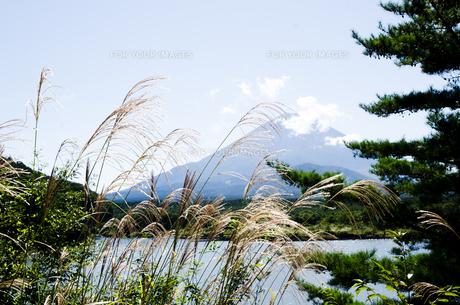 富士山とススキ 精進湖よりの写真素材 [FYI00883535]