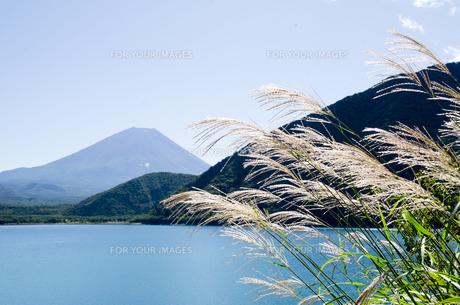 富士山とススキ 朝霧高原の写真素材 [FYI00883536]